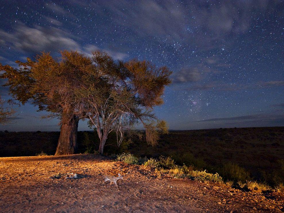 Tanzania Landscape Night