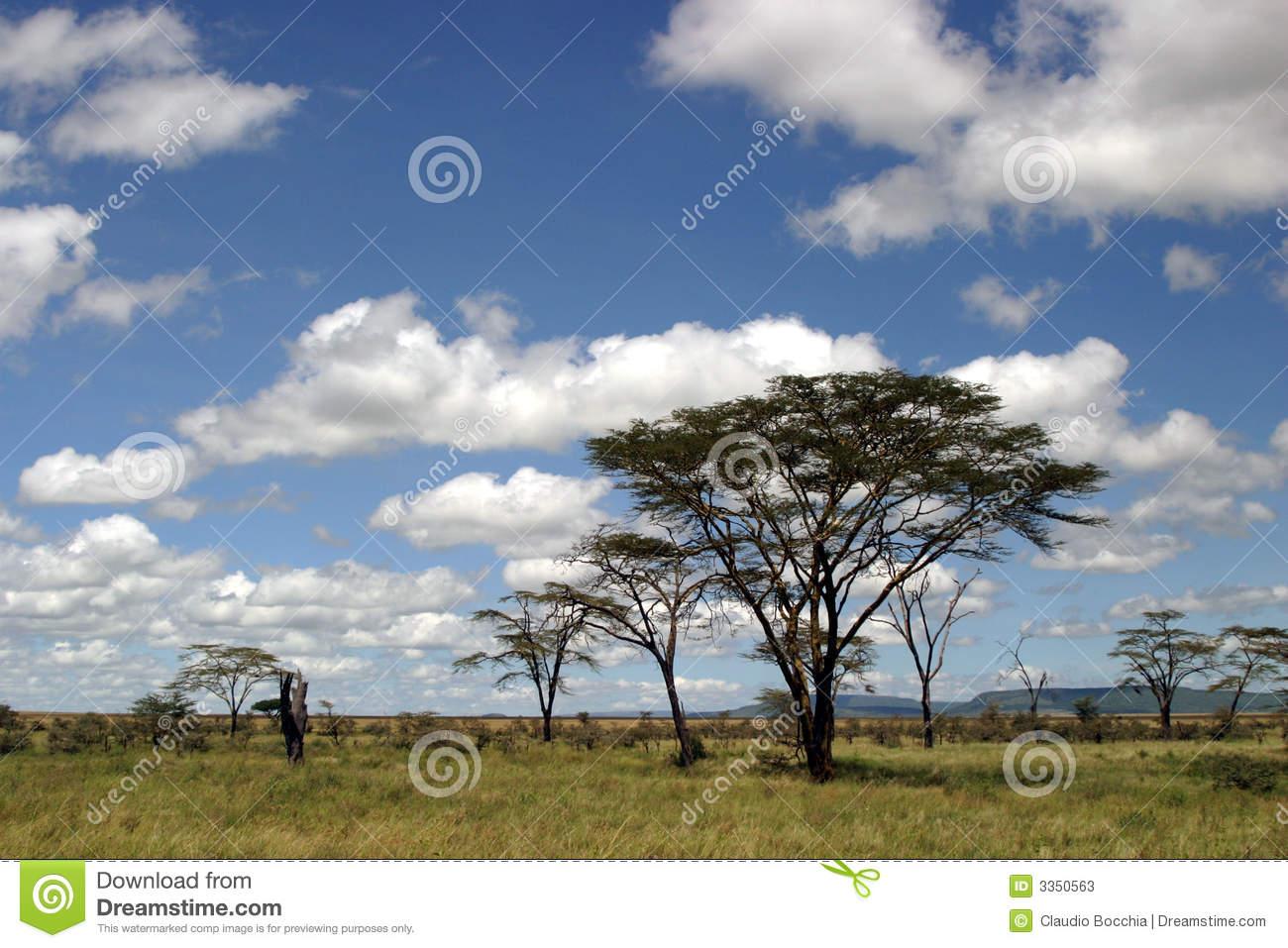Tanzania Landscape Safari