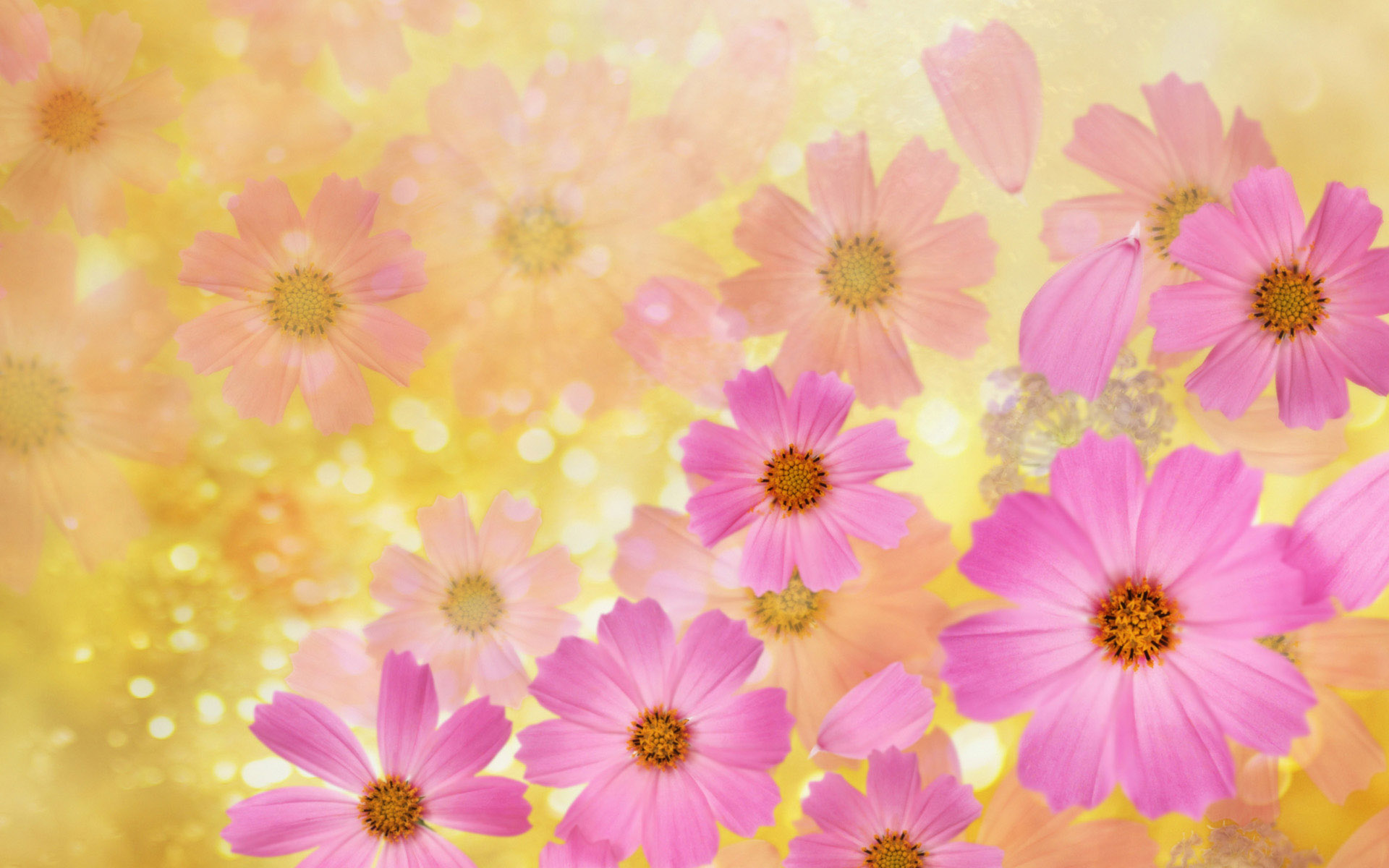 Beautiful Spring Flowers Desktop