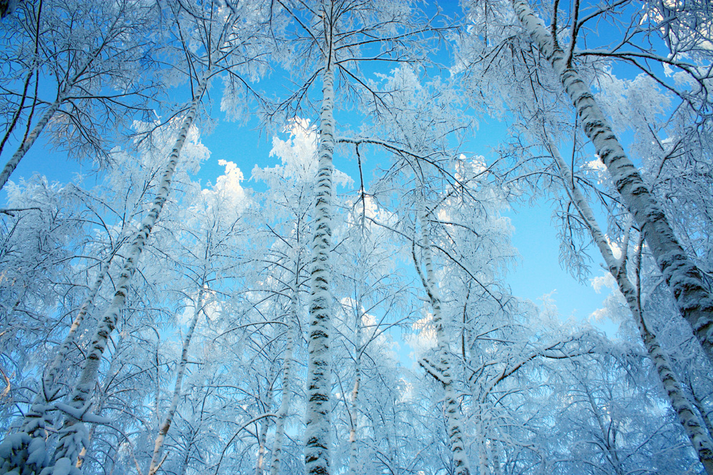 10 Free Stock Photography Winter Images