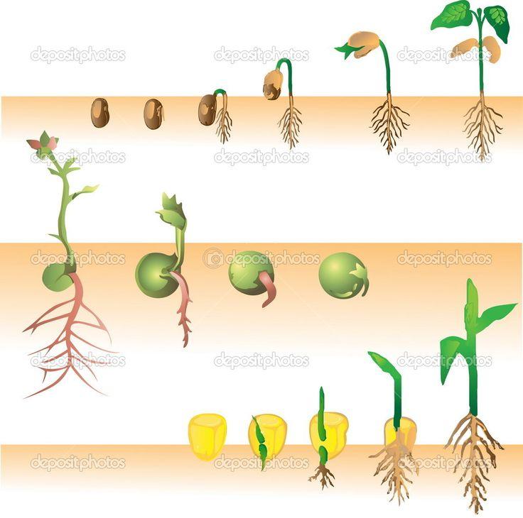 Growing Plant Illustration