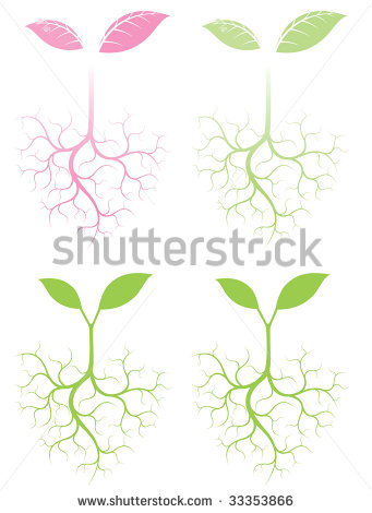 Growing Plant with Roots Vector