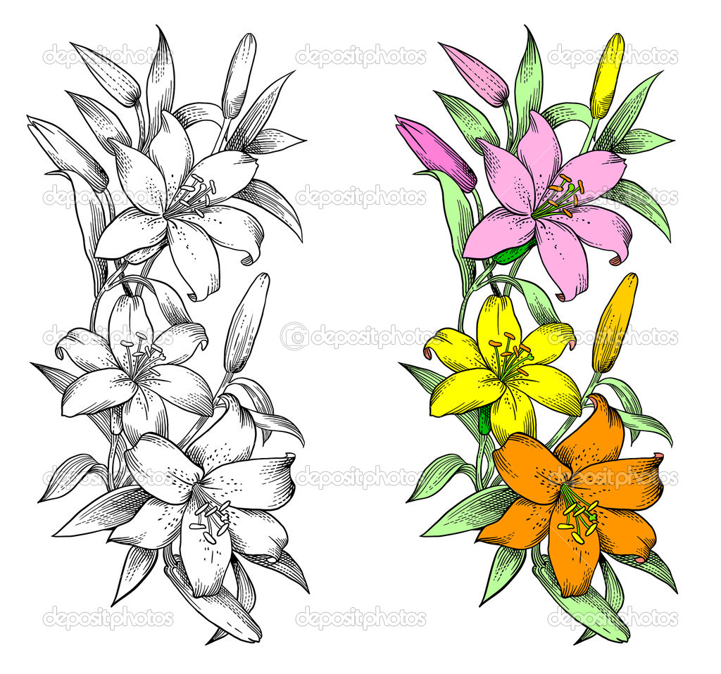 13 Lily Vector Designs Images - Water Lily Clipart-Vector ...