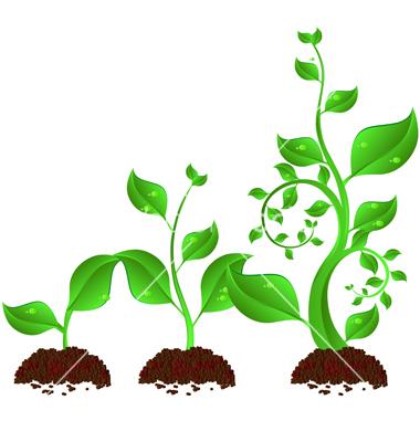 Plant Growth Cartoon