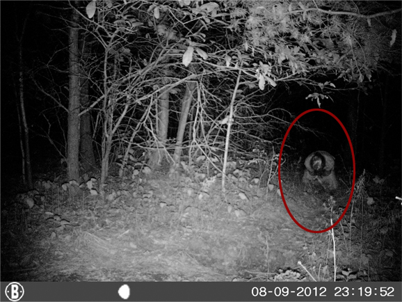17 Spiritual Photography Ghost Real Images Real Ghost Spirit