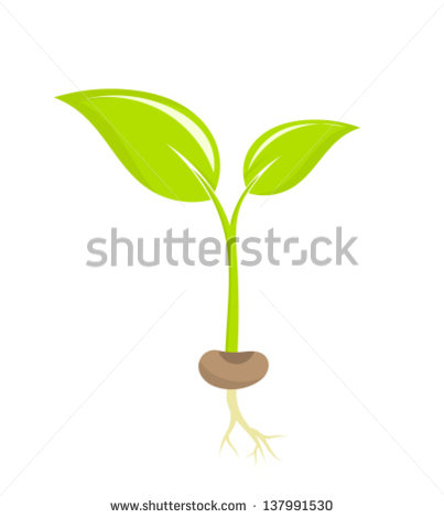 Seed to Plant Clip Art