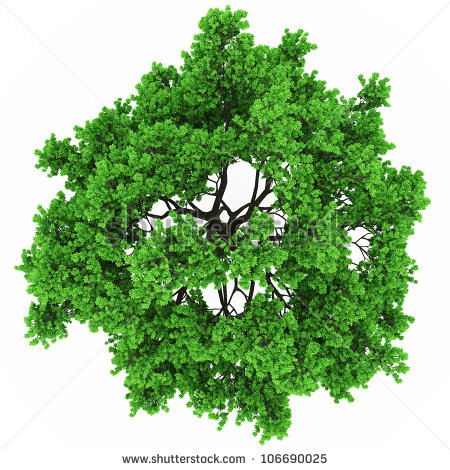 7 Vector Trees Plan View Images
