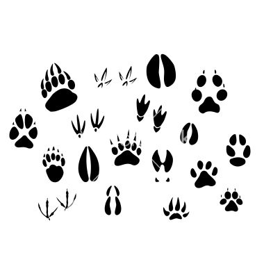 11 Animal Tracks Vector Images