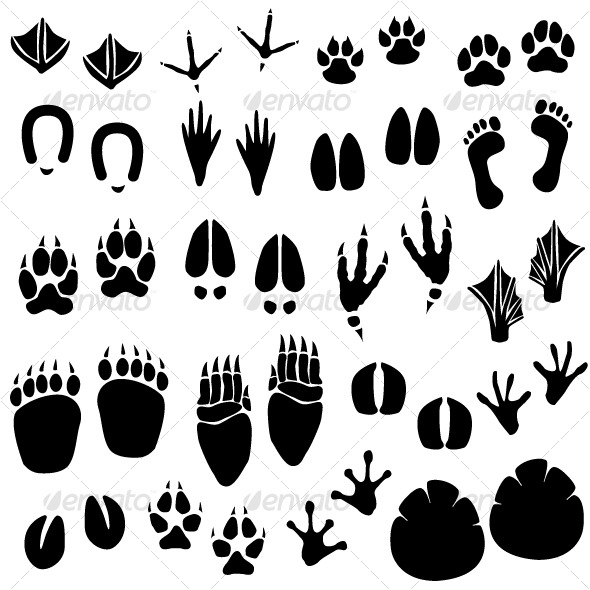 Different Animal Tracks Footprints
