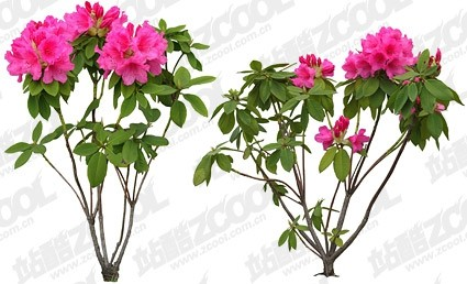 Free Psd Flowers