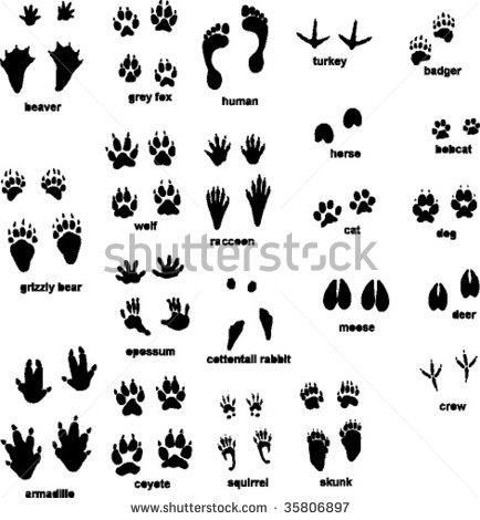 Printable Safari Animal Tracks