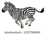 Zebra Head Side View