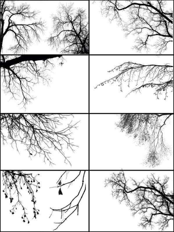 Black Tree Border