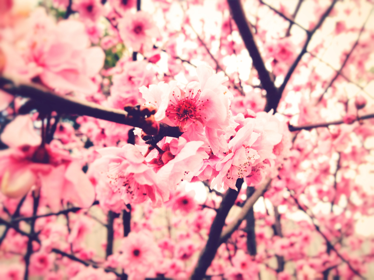 9 Tumblr Spring Photography Images