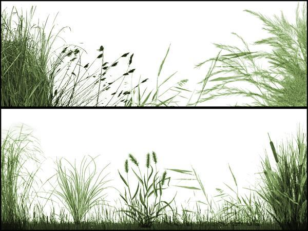 Grass Brush Photoshop