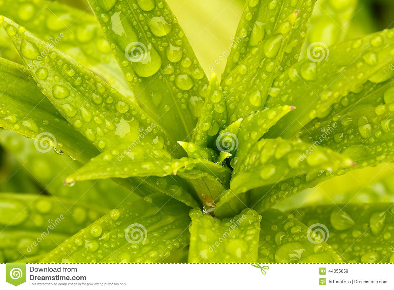 Green Water Droplets On Plants