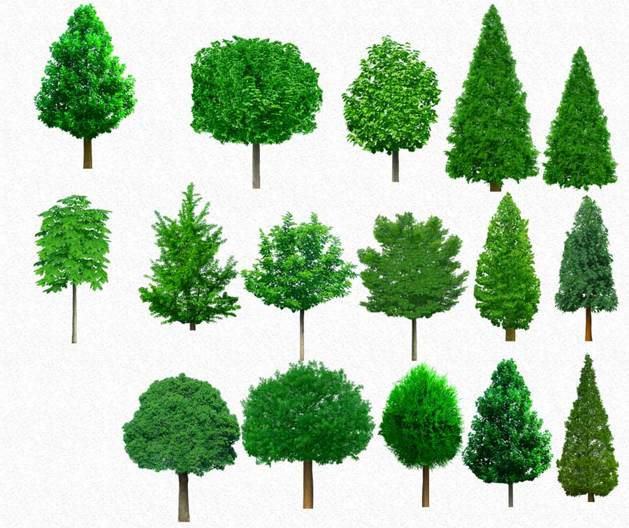 14 PSD Plants Trees Images
