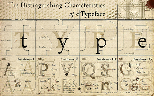 Type Anatomy Typography