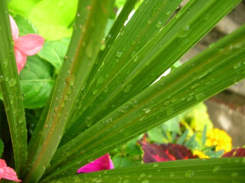 Water Droplets On Plants
