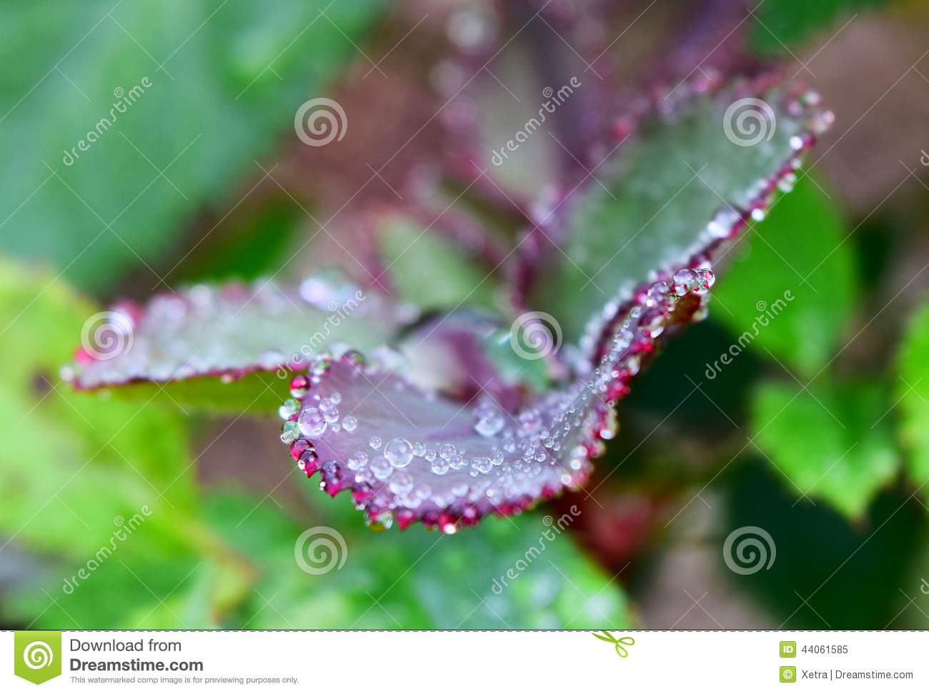 Water Drops On Plants