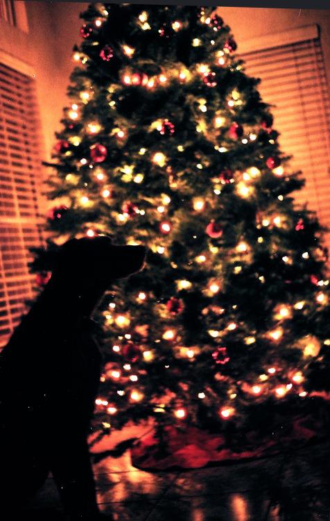 Christmas Tree Tumblr.20 Christmas Photography Tumblr Images Christmas Tumblr
