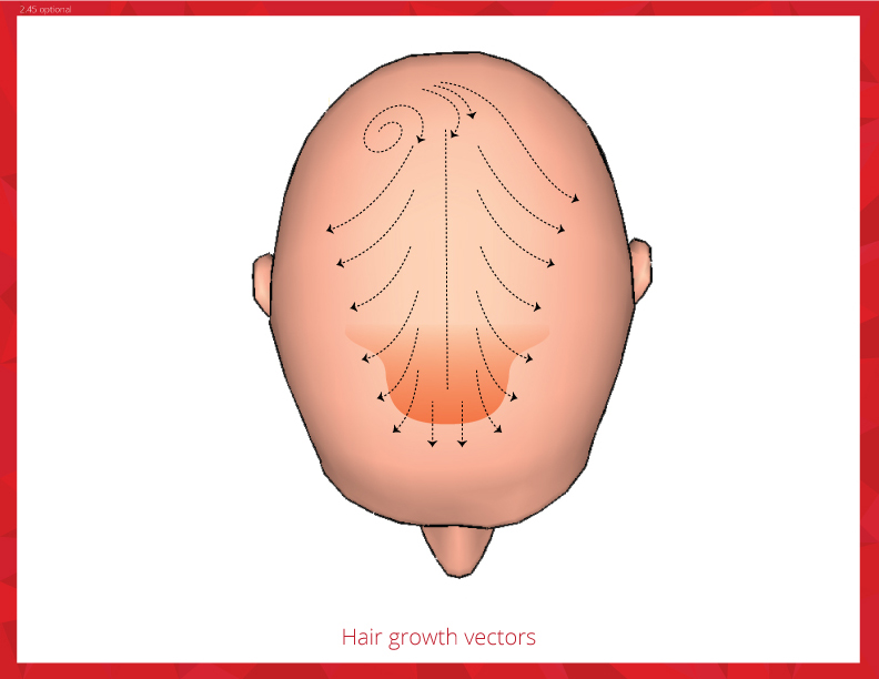 11 Hair Growth Vectors Images