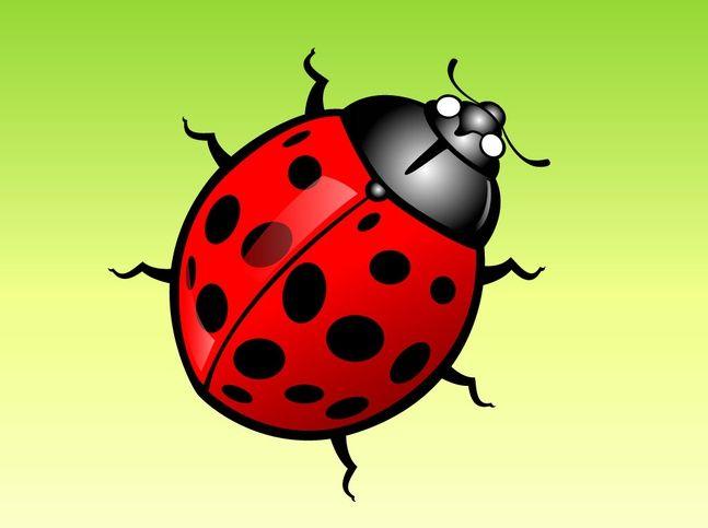 17 Free Bug Vectors Pinterest Images