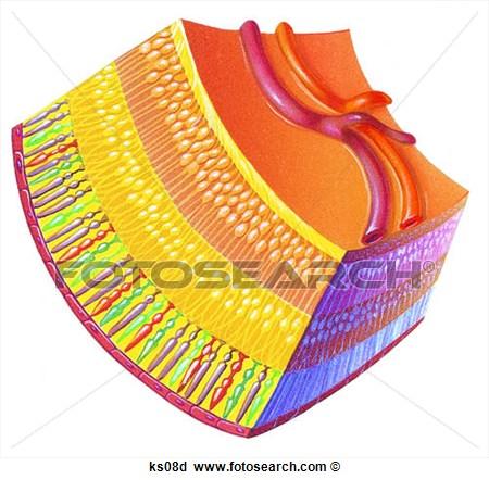 5 Retina Vector Art Images