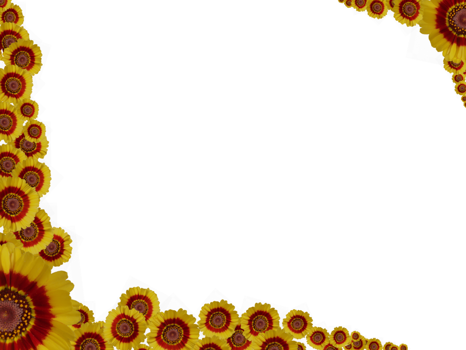 Flower Border Transparent