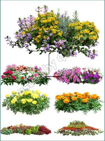 Flowers Plants Photoshop