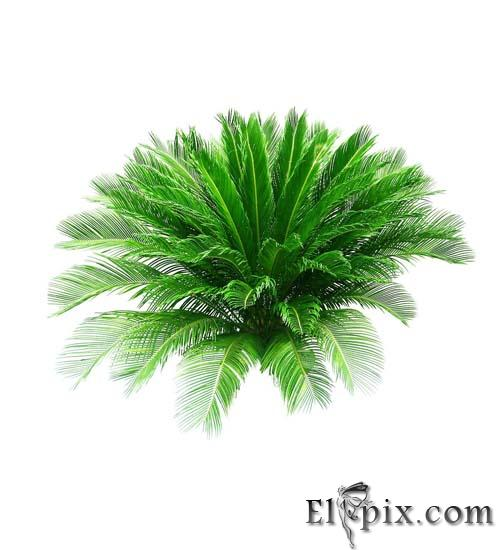 Free Plant Graphics Photoshop