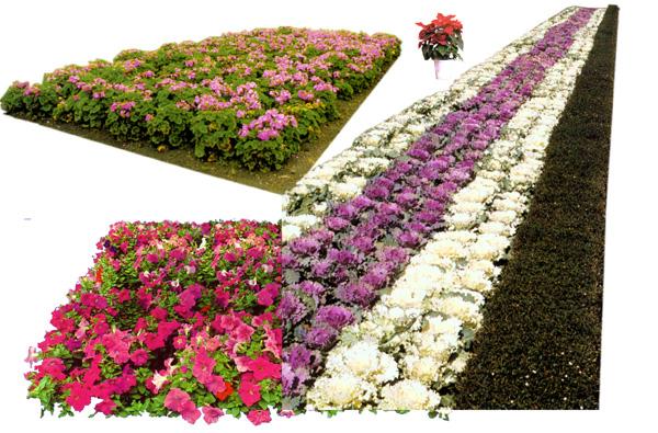 Garden Flowers Sources