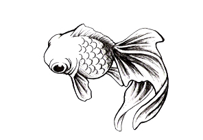 Japanese Fish Tattoos Drawings