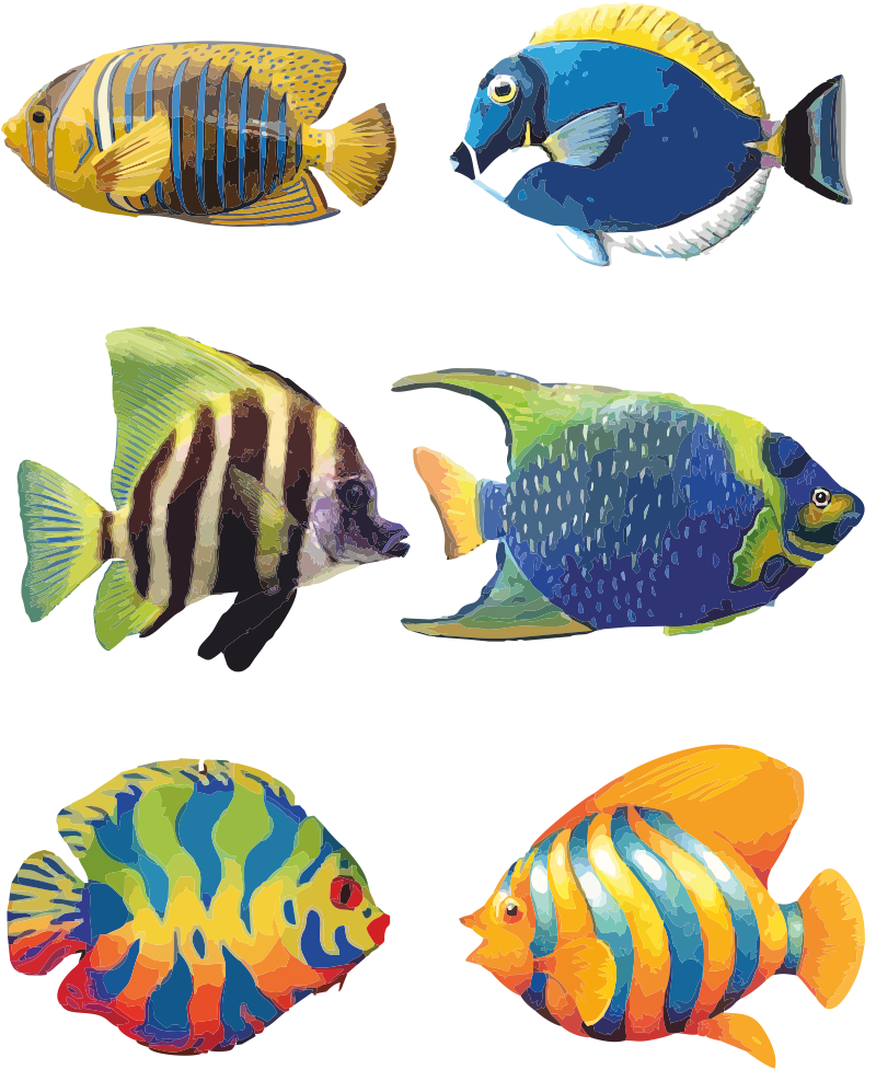 Tropical Fish Drawings