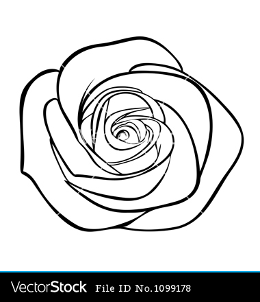 6 White Rose Vector Images