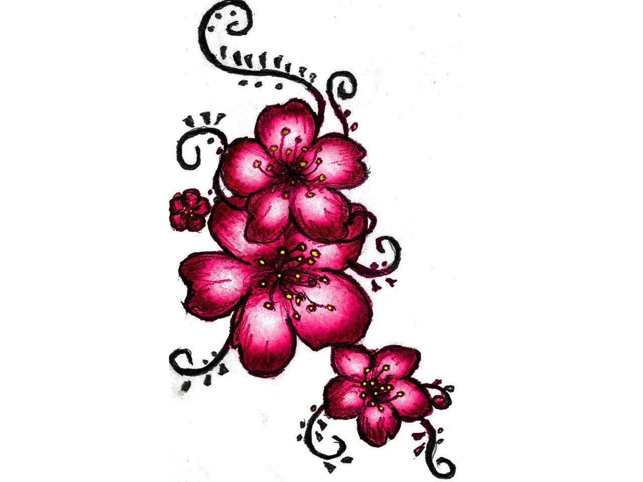 19 Cherry Blossom Designs Images