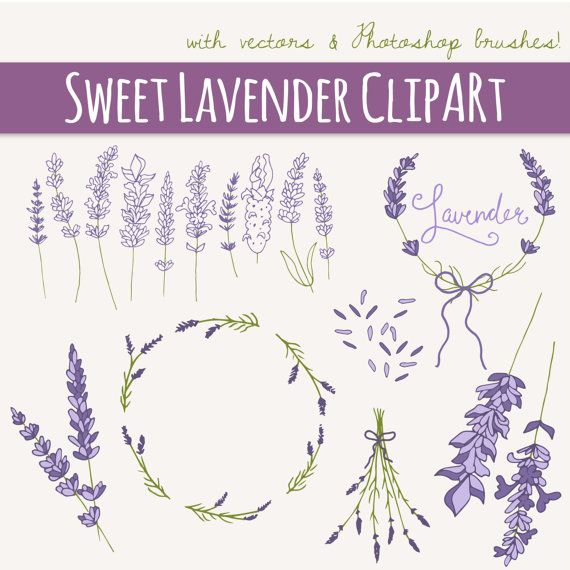 Lavender Sprig Clip Art