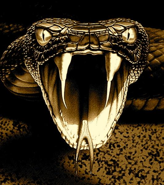Black Viper Snake Drawings