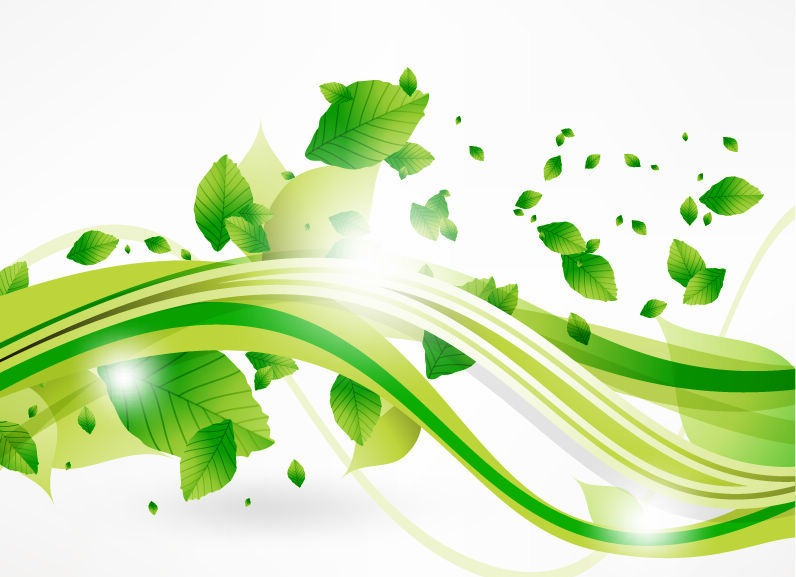 16 Green Eco -Leaf Vector Image Images