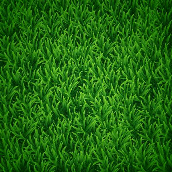 19 Grass Vector Background Graphics Images
