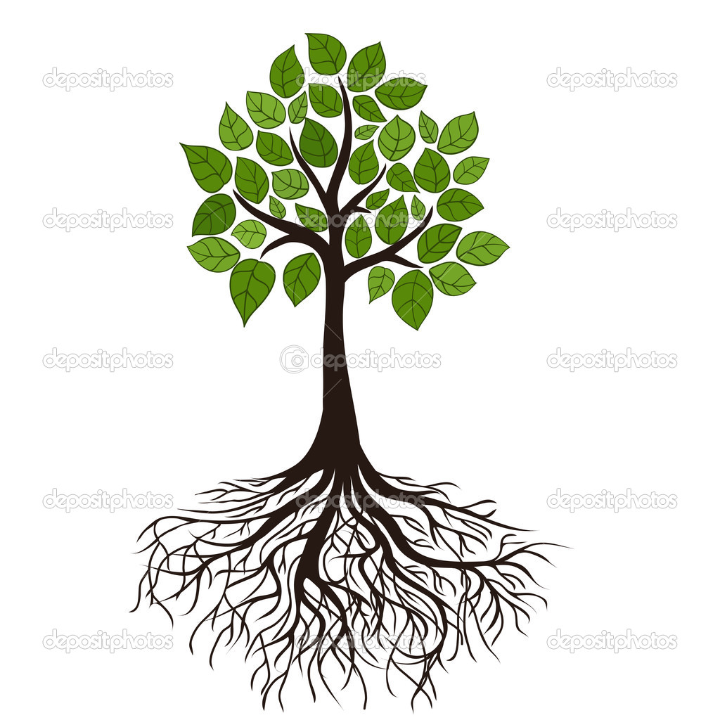 17 Tree Roots Vector Images