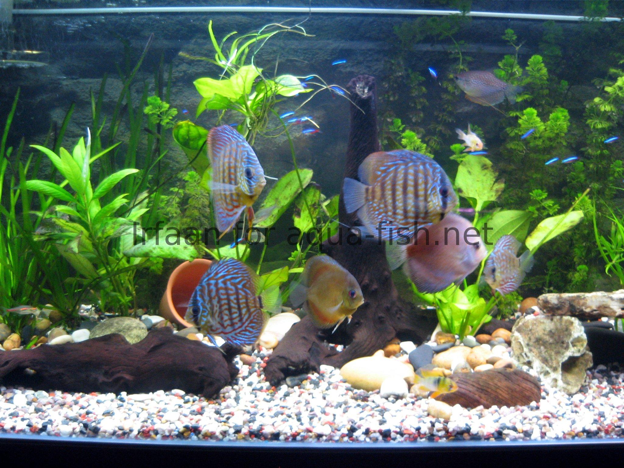 Aquarium Fish Tank Designs