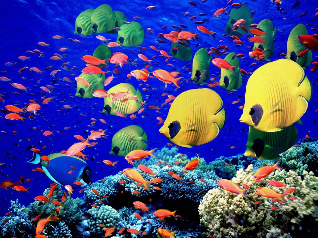 17 Tropical Fish Designs Images