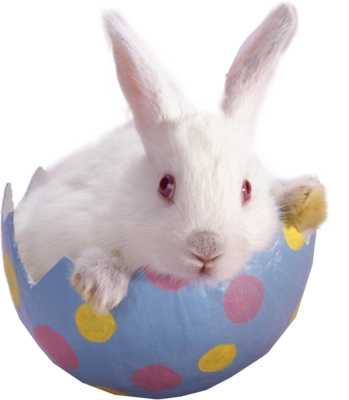 13 Easter Bunny PSD Images