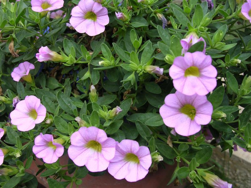 Edible Plants with Flowers
