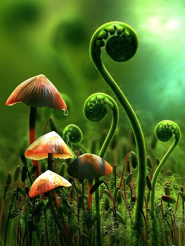 Fiddlehead Ferns and Mushrooms