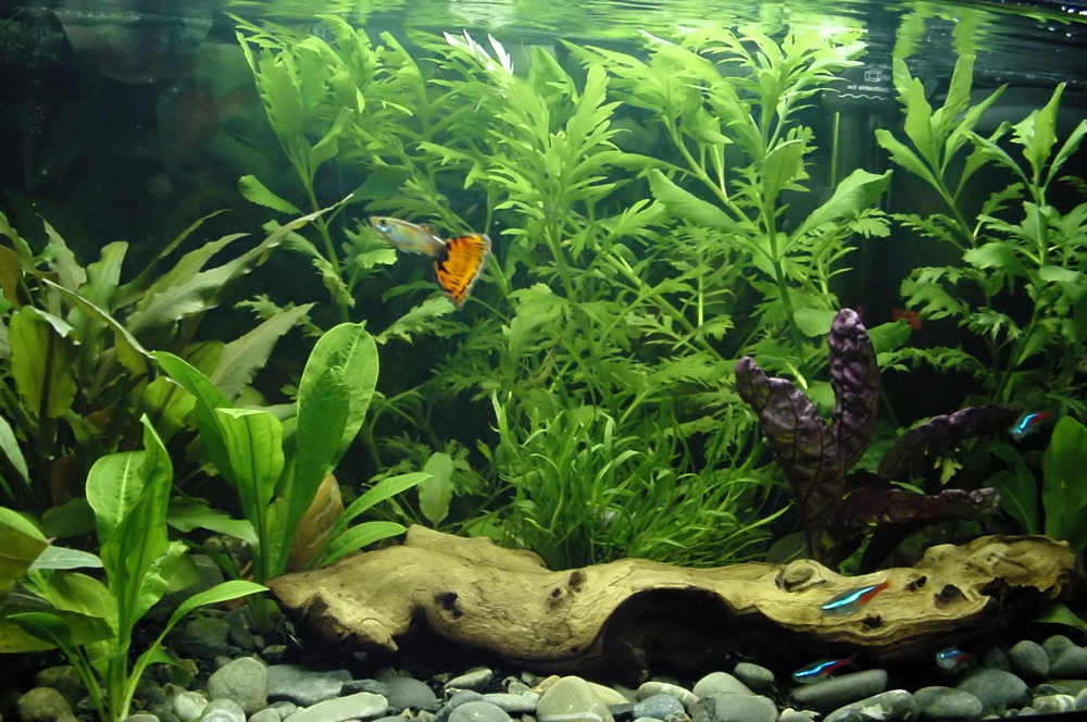 Fish Tanks Aquariums Decorations