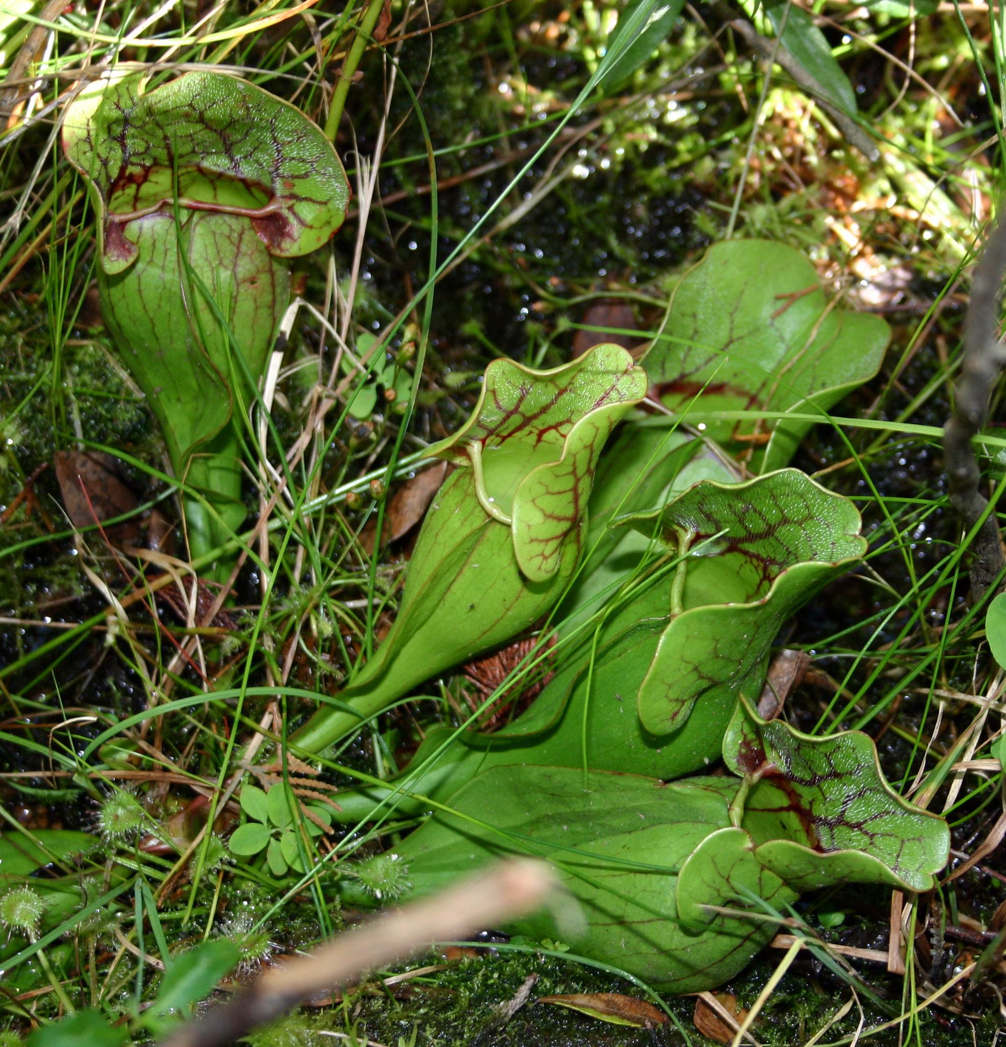 Florida Medicinal Plants