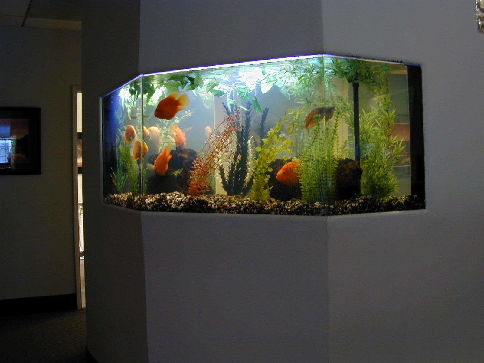 Freshwater Fish Tank Designs