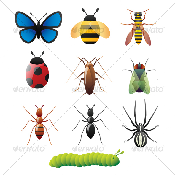 Insect Vector